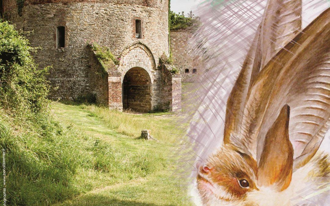 À la renverse ! La citadelle, un refuge pour les chauves-souris du montreuillois.